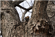 Squirrel in a tree in Columbian Park by Mark Bass