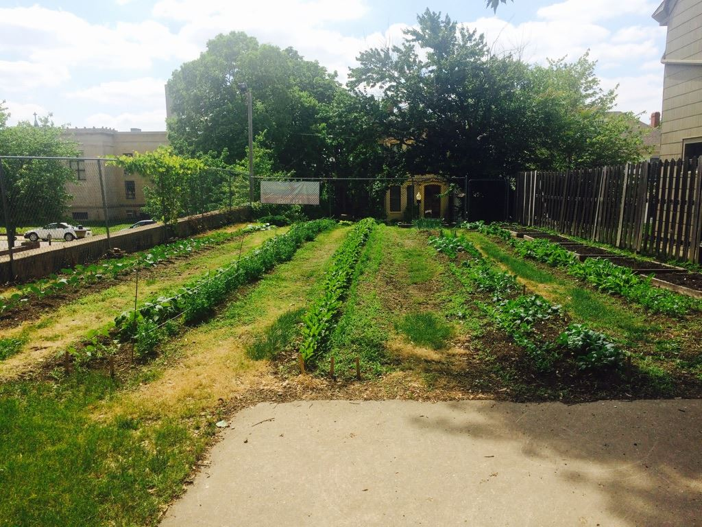 First baptist sharing garden 2015(2)