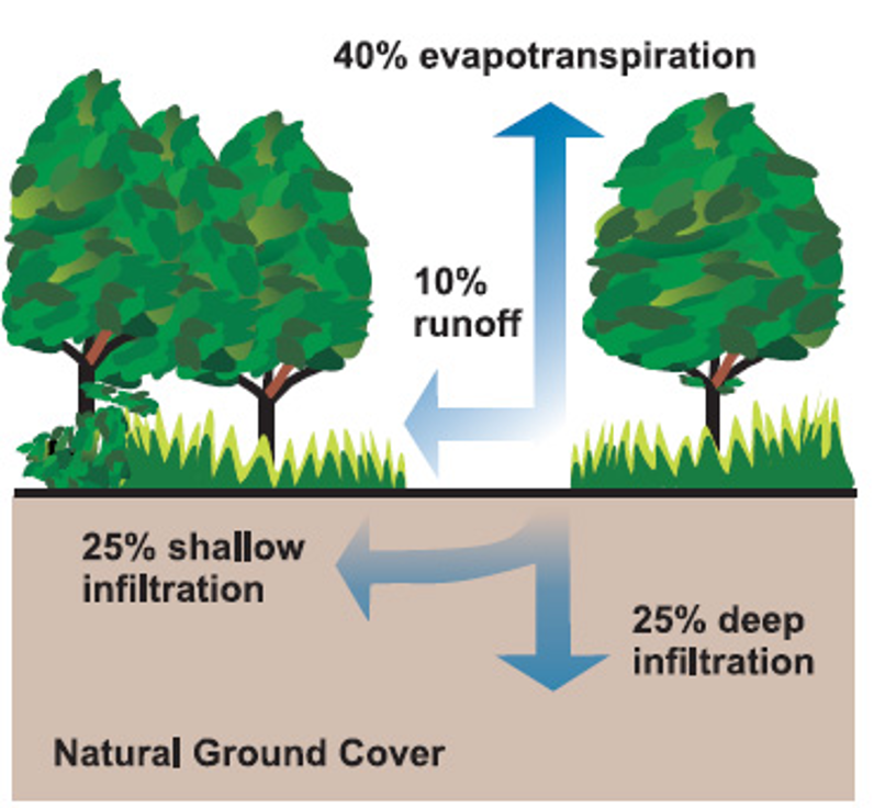 Natural land cover allows 75% or more stormwater to infiltrate into the soil