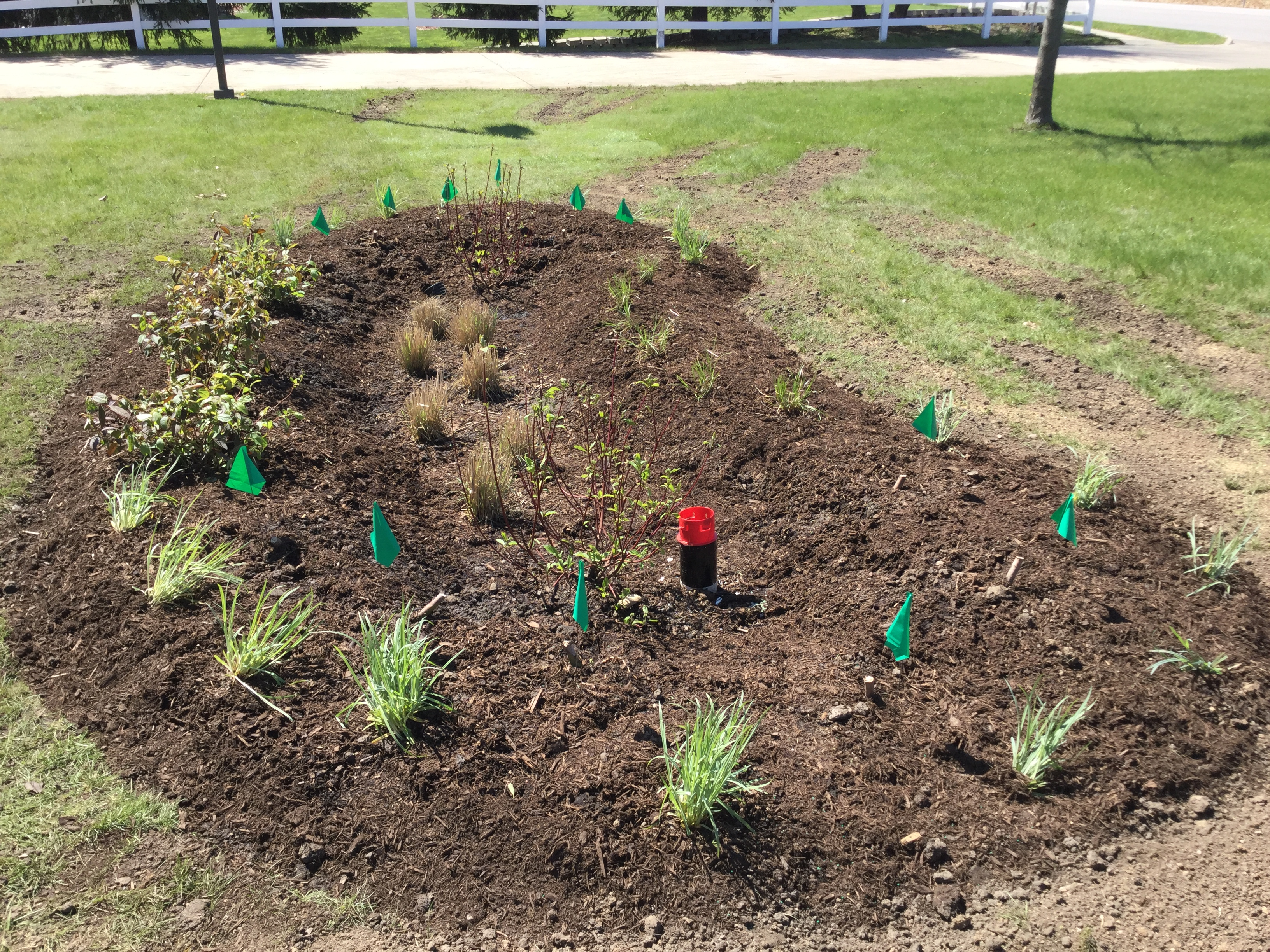Lafayette fire station rain garden soon after planting