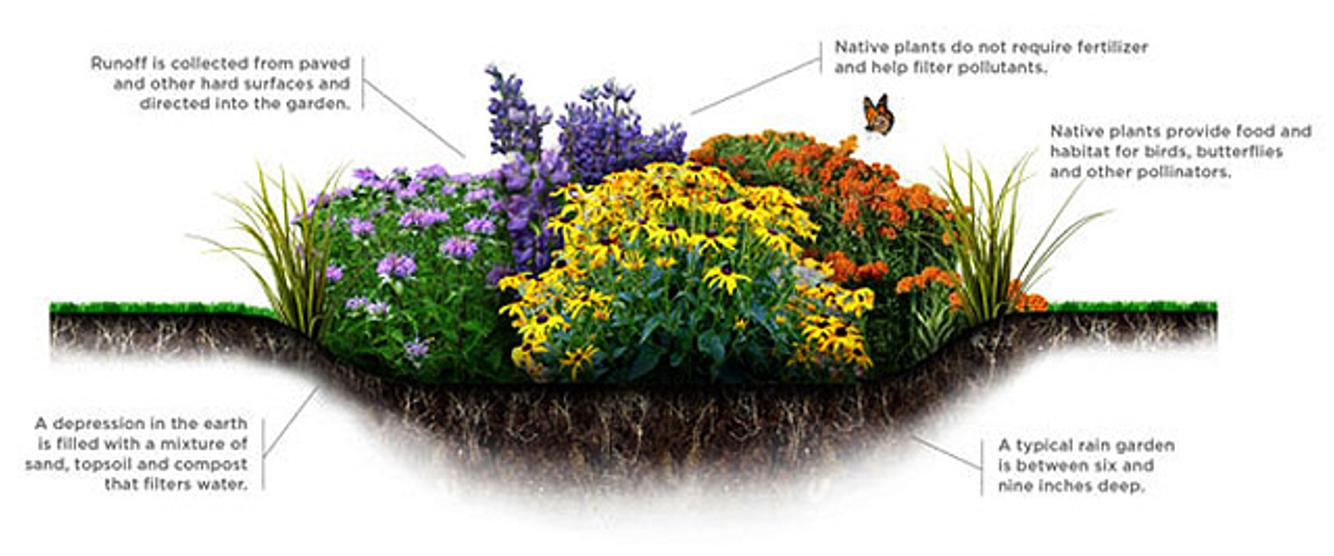 Diagram of a rain garden